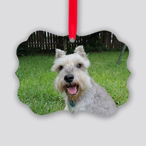 Precious Mini Schnauzer on Grass Picture Ornament