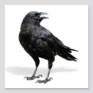 "Black Crow Square Car Magnet 3"" x 3"""