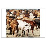A Herd of Cattle Large Poster