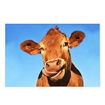 Selfie Cow Postcards (Package of 8)