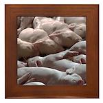 Baby Pigs Framed Tile