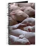 Baby Pigs Journal