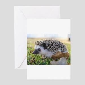 Hedgehog Greeting Cards