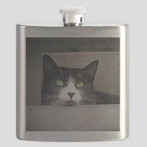Schubert the daydreaming cat Flask