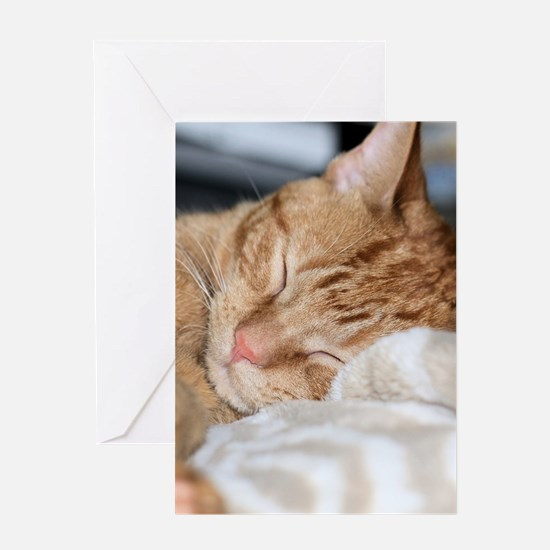 Purrfectly sleeping Greeting Cards