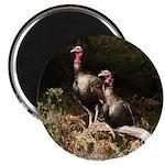Two Turkeys on a Log 2.25