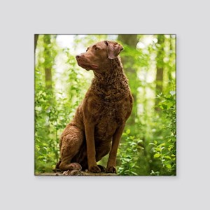 Chesapeake Bay Retriever Sticker