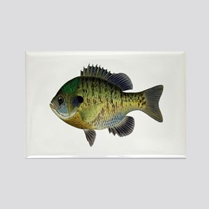 BLUEGILL Magnets