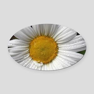 Dewy Daisy Oval Car Magnet