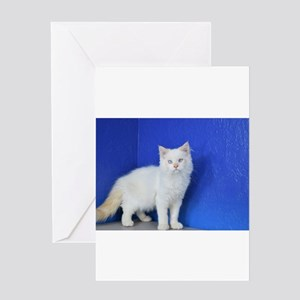 Aden - Red Point Ragamuffin Kitten Greeting Cards