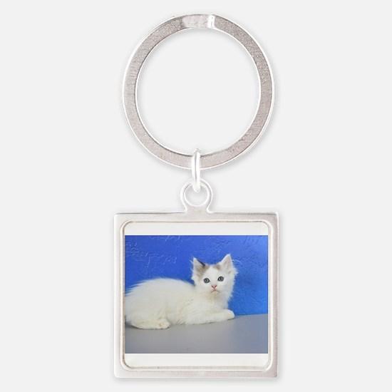 Brett - Seal Van Bicolor Mink Ragdoll Kitten Keych