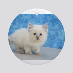 Christmas Carol - Blue Point Ragdoll Kitten Round