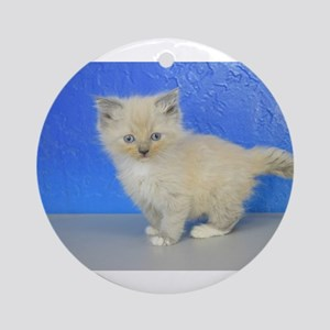 Christmas Star - Blue Mitted Mink Ragdoll Kitten R