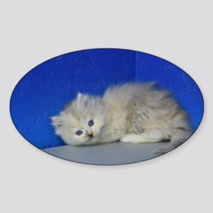 Cindy Lou Who - Blue Cream Mitted Mink Ragdoll Kit