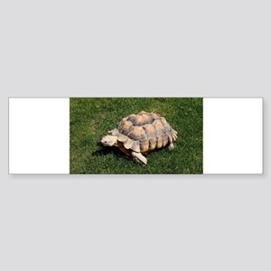 Tortoise 2 at the zoo Bumper Sticker