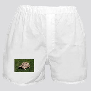 Tortoise 2 at the zoo Boxer Shorts
