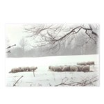 Winter Sheep Postcards (Package of 8)