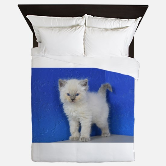 Fonzie - Blue Point Ragdoll Kitten Queen Duvet