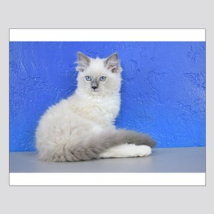 Isabelle - Blue Mitted Ragdoll Kitten Posters