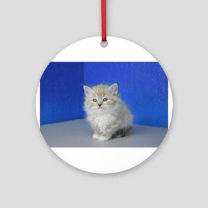 Jenna - Seal Mitted Lynx Mink Ragdoll Kitten Round