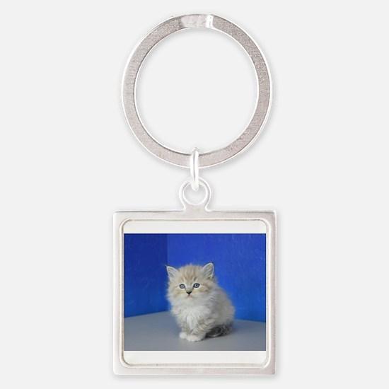 Jenna - Seal Mitted Lynx Mink Ragdoll Kitten Keych
