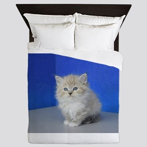 Jenna - Seal Mitted Lynx Mink Ragdoll Kitten Queen