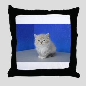 Jenna - Seal Mitted Lynx Mink Ragdoll Kitten Throw
