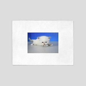Jenny - Seal Tortie Mitted Ragamuffin Kitten 5'x7'