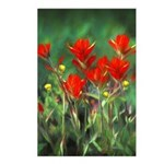 Indian Paintbrush Postcards (Package of 8)