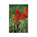 Indian Paintbrush Rectangle Magnet (10 pack)