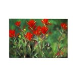 Indian Paintbrush Rectangle Magnet (100 pack)