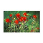 Indian Paintbrush 35x21 Wall Decal