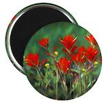 Indian Paintbrush Magnet