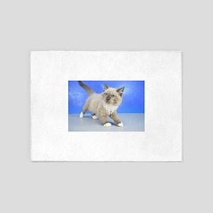 Landen - Seal Mitted Mink Ragamuffin Kitten 5'x7'A