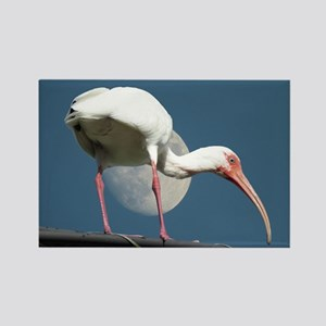 ibis Magnets