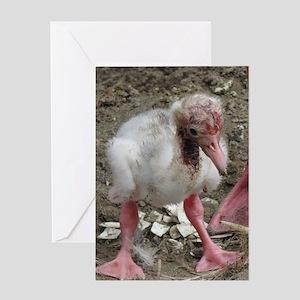flamingo chick Greeting Cards