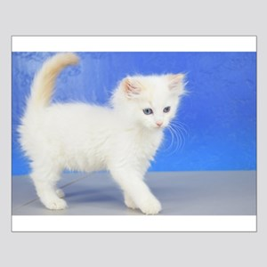 Moses - Cream Bicolor Ragdoll Kitten Posters