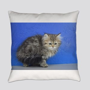 Opal - Silver Golden Tabby Ragamuffin Kitten Every