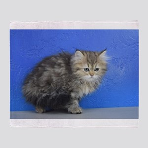 Opal - Silver Golden Tabby Ragamuffin Kitten Throw