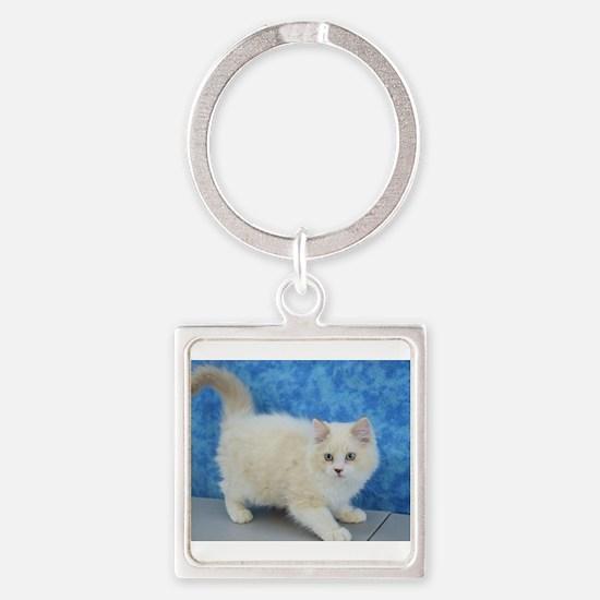Zane - Lilac Bicolor Lynx Mink Ragdoll Kitten Keyc
