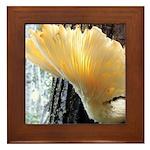 Oyster Mushroom Framed Tile