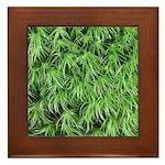 Green Moss Framed Tile