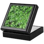 Green Moss Keepsake Box
