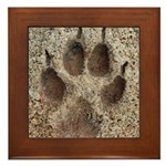 Coyote Track Framed Tile