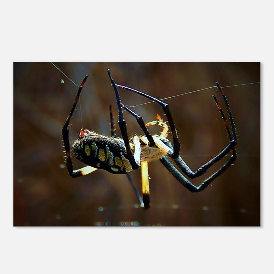 Funny Spider Postcards (Package of 8)