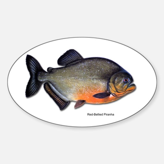 Red-Bellied Piranha Fish Oval Decal