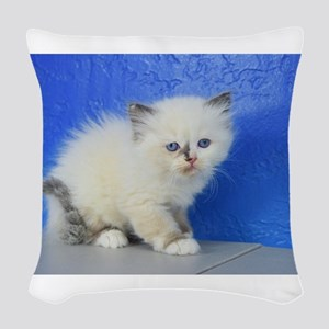 Jenny - Ragamuffin Kitten 126 Seal Tortie Mitted W