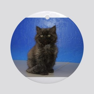 Jingle - Ragamuffin Kitten 126 Black Smoke Shaded