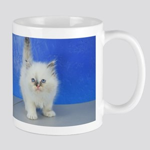 Laura - Ragamuffin Kitten 126 Blue Cream Mitted Mu
