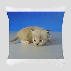 Quentin - Ragamuffin Kitten 126 Seal Mitted Lynx M